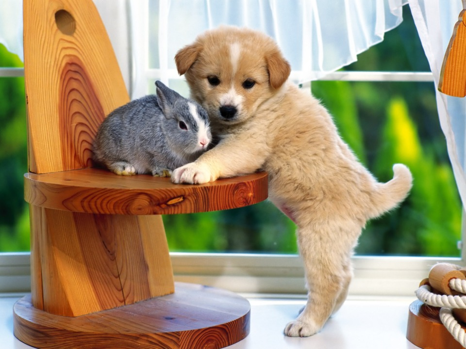 Sweet-puppy-with-bunny-puppies-14749075-1600-1200